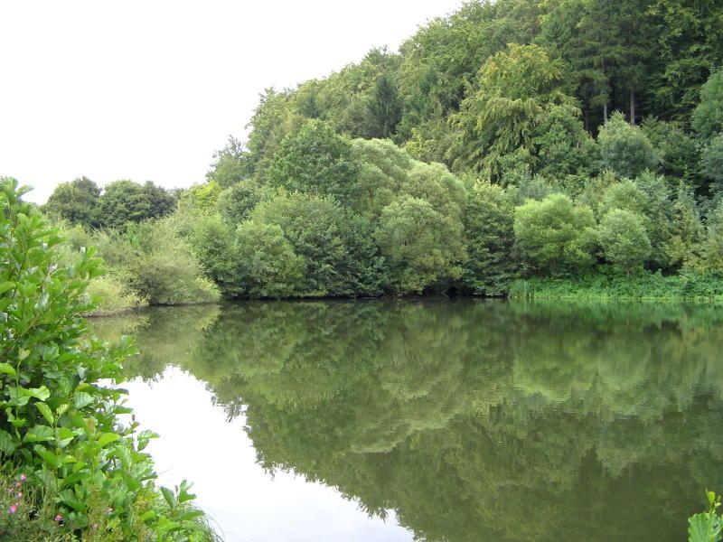 Die Mündung des Bachs Nethe in den Nethestausee