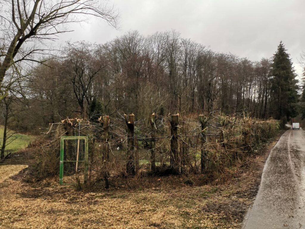 fachgerechter Baumschnitt an der Teichanlage